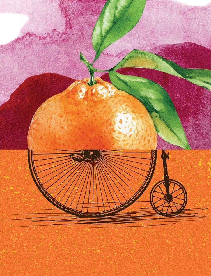 Teals Somerset - Orchard