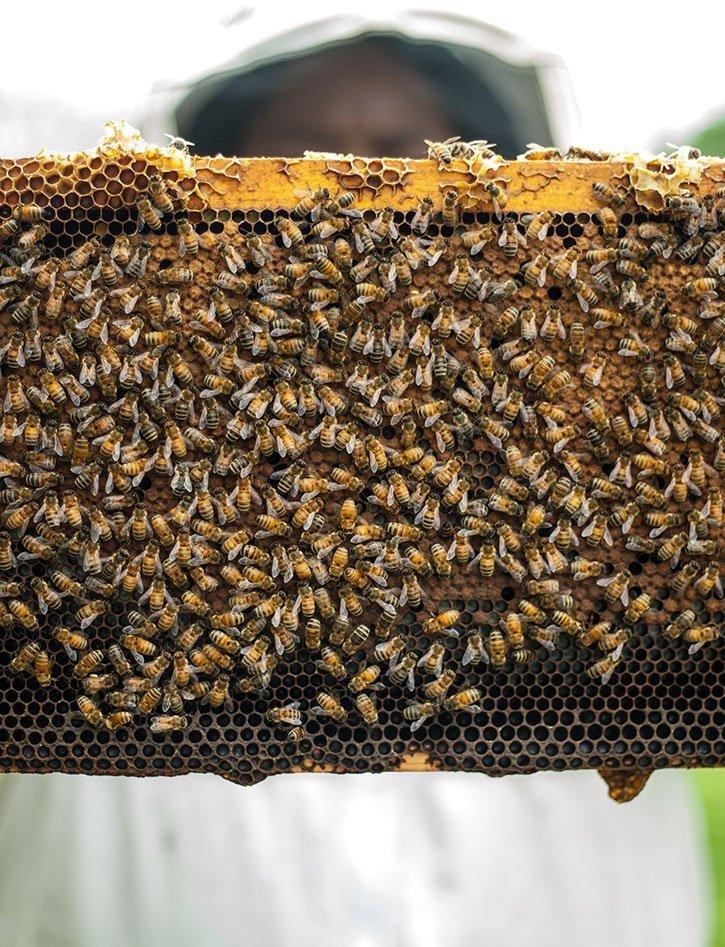 Teals Bees