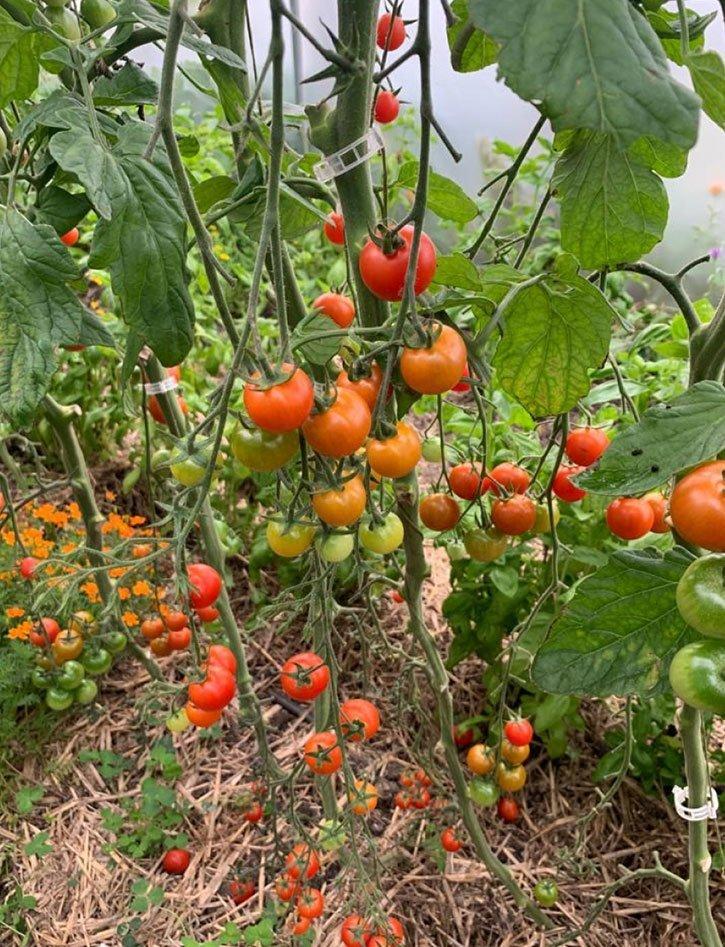 Teals Somerset - Wild Garden Article