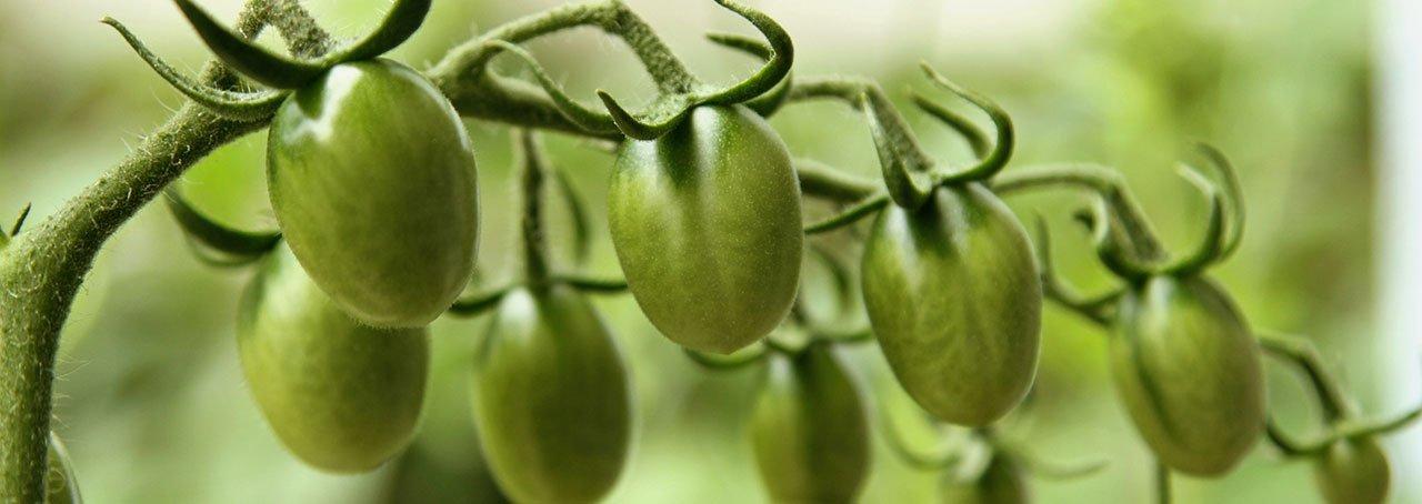 Wild Garden Article - Teals Somerset